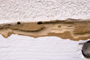 Shot of termite damage with deep hole on a wooden roof beam outside on a House, caused by termites.""