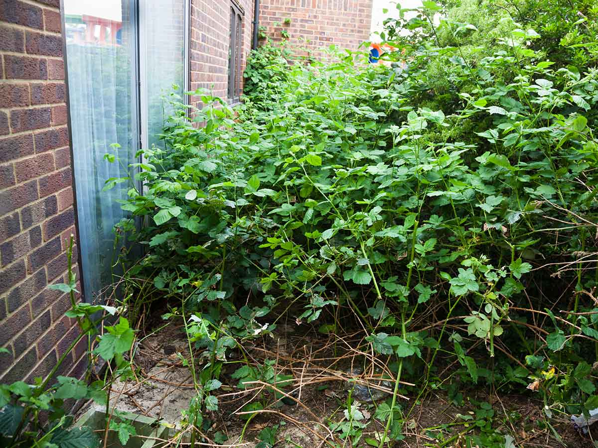 overgrown areas that attract rats