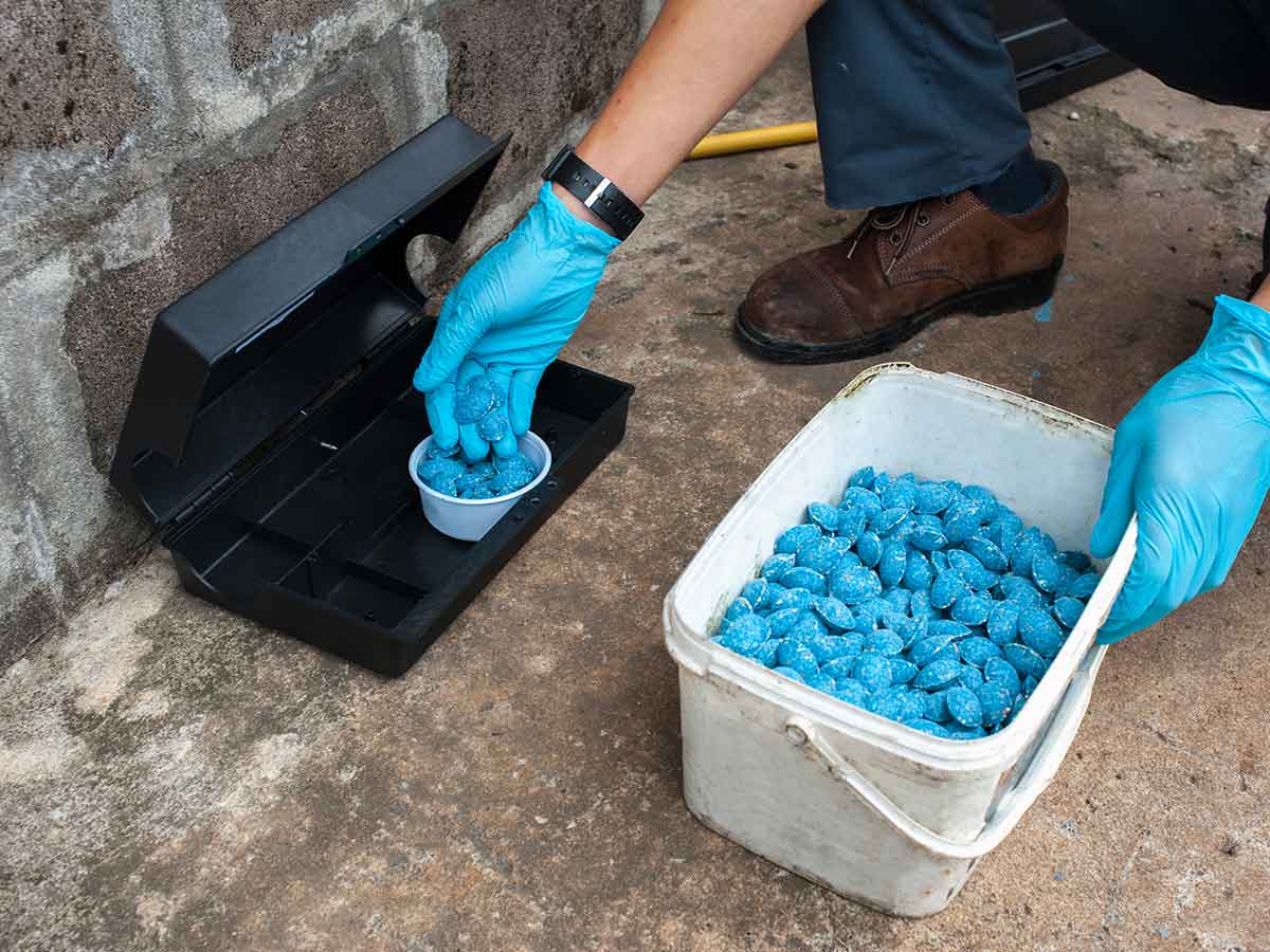 rat-bait-boxes-how-to-get-rid-of-rats-from-your-yard-and-prevent-them-from-coming-back