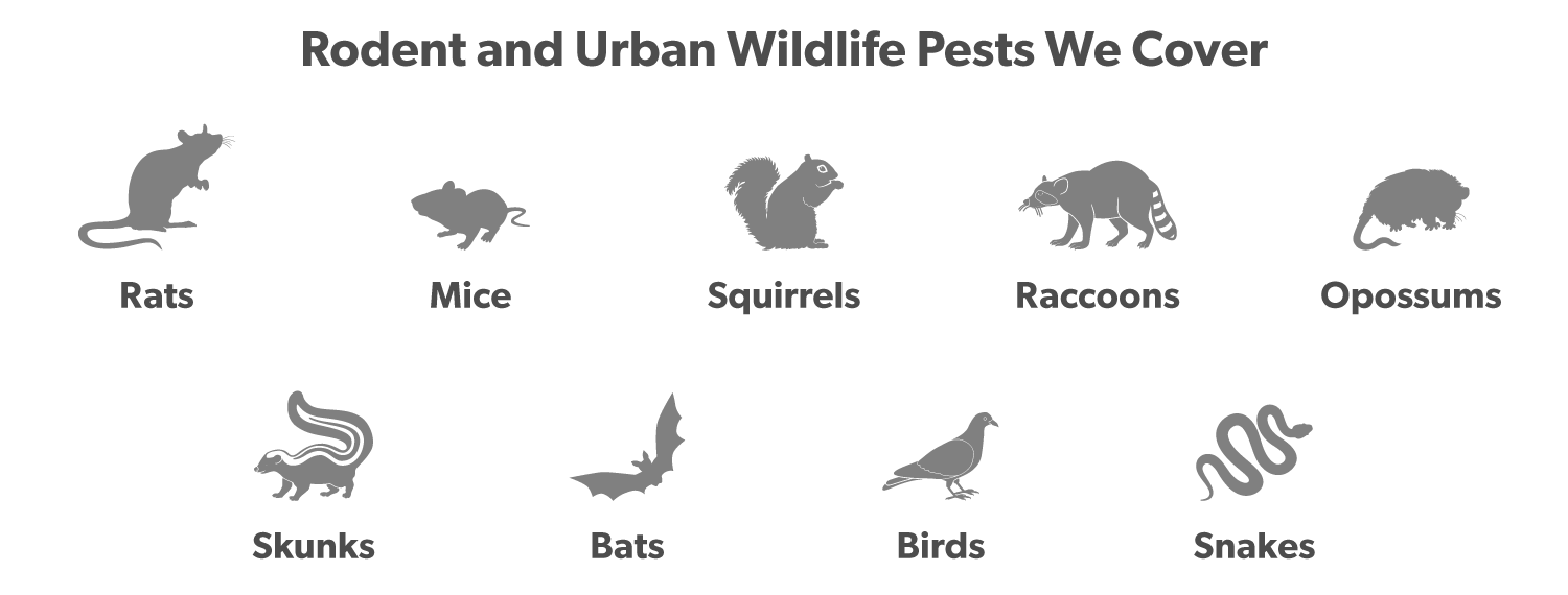 rodents-and-urban-wildlife-the-bug-master-covers